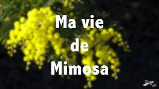 "2014 02 16 ""Ma Vie de Mimosa"" FV3L 2014 10 03 0459"