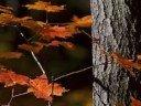 Autumn Leaves -- Doris Day