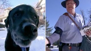 mailman-who-realizes-his-favorite-dog-is-getting-older-comes-up-with-a-genius-plan