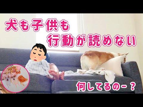 犬と子供の謎な行動【ノエさんプラバン作ってみた】
