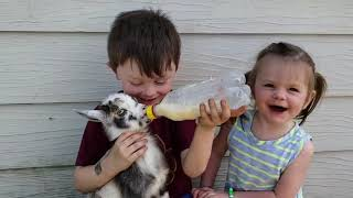 Funny Kids And Animals Compilation No.3