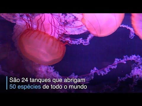 afpbr: O charme das águas-vivas