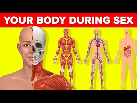What Happens to Your Body While You Are Having Sex?