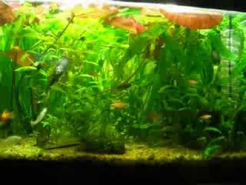 аквариум 100 литров, травник - джунгли =)