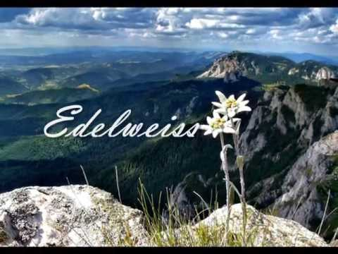 Edelweiss lyrics and music