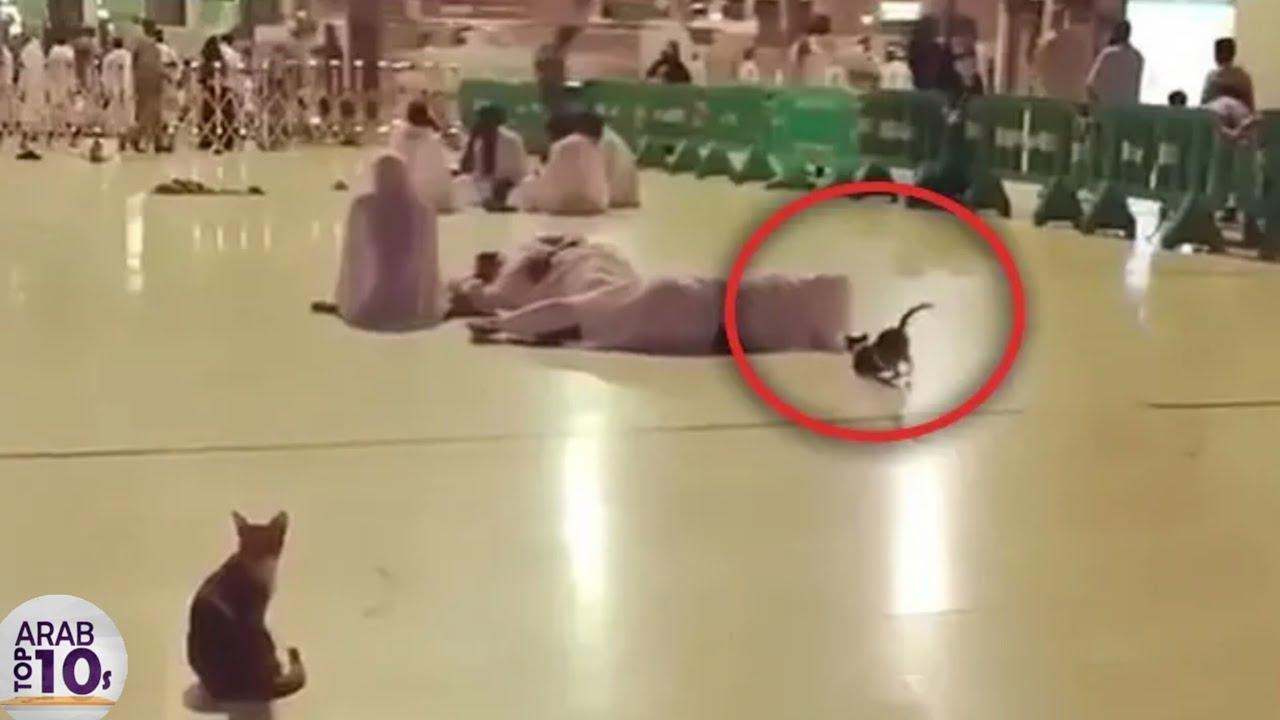 شاهد ماذا يفعل هذا القط عندما سماع صوت لأذن سبحان الله