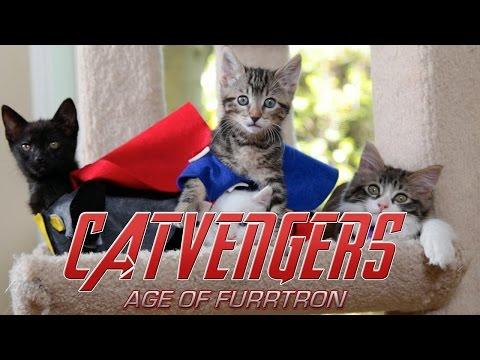 Marvel's Avengers: Age of Ultron (Cute Kitten Version)