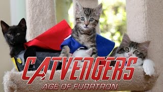 Marvel's Avengers: Age of Ultron (Cute Kitten Version)