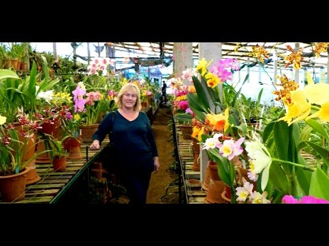 Madeira Orchid Nursery - Quinta da Boa Vista : 9 of 13