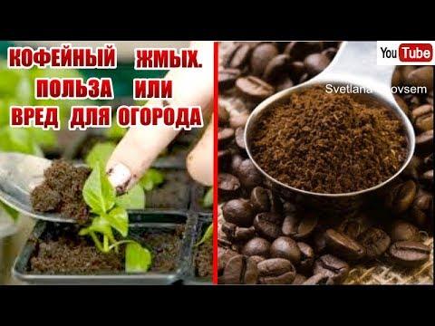 Вопрос: Как использовать кофейную гущу в вашем саду?