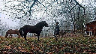 Horse Clicker Training | 1 # Session - Back lift and Panther walk T...