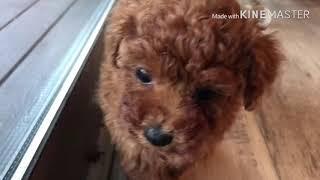 福岡県みやま市のトリミングサロン Beauty Puppy Pet(ビューティパピー...