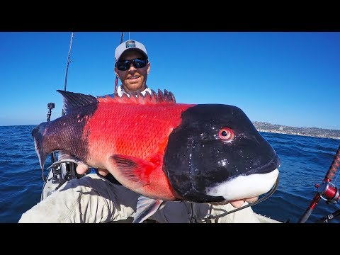 Kayak Fishing For California Sheephead | #FieldTrips West Coast