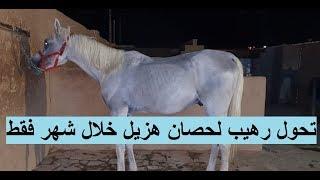 A Fantastic Transformation for a poor horse تحول رهيب لحصان هزيل خلال شهر واحد فقط - قبل وبعد
