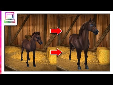 Star Stable Horses - My Morgan Horse Evolution (NEW Horse Breed)