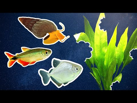 What Fish Should You Avoid In A Planted Aquarium?