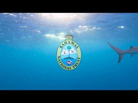 The Bahamas is a Shark Sanctuary | PSA