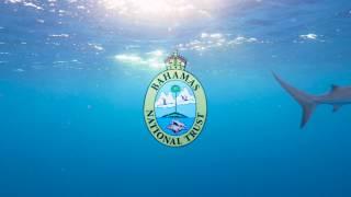 The Bahamas is a Shark Sanctuary | PSA