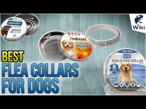 Top 7 Flea Collars For Dogs Of 2019 Video Review