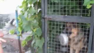 собака - алкан :DDDD пиво нннада!?!?