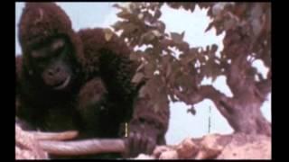 King Kong se révolte (1976) Bande-annonce VOST FR/NDRL