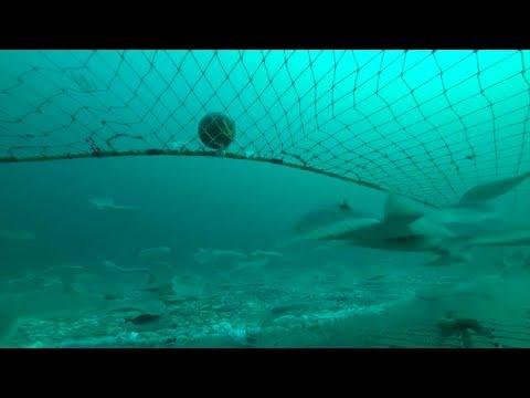Masakra nën dallgë - Pamje ekskluzive të metodave që përdoren në peshkimin e paligjshëm- Top Story