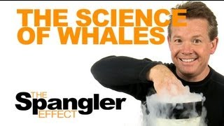The Spangler Effect - The Science of Whales Season 01 Episode 20