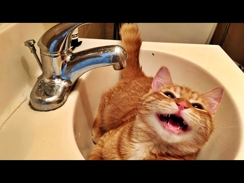 Top 10 Funny Cat Videos Compilation (Part 1)- Funny Cat Videos for Children