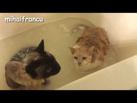 """funny cat 2017    Cats Saying """"No"""" to Bath - A Funny Cats In Water Compilation"""