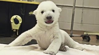 Cuteness overload: Top 15 cutest baby animals present by TomoNews - Compilation