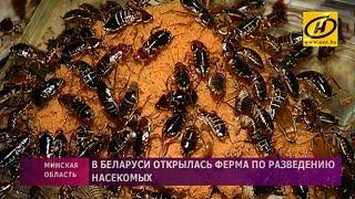 Ферма по разведению насекомых открылась в Беларуси