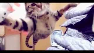 в конце видео кот-супер герой)))
