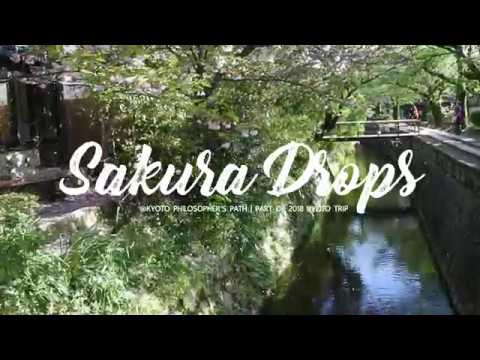 Sakura Drops at Kyoto Philosopher's Path 2018