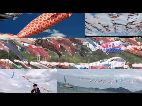 鯉のぼり/FISH KITES 🪁/JAPANESE KOINOBORI/ Marlindasaikusa