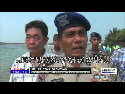 Dead Fish Wash Up on North Jakarta Coast
