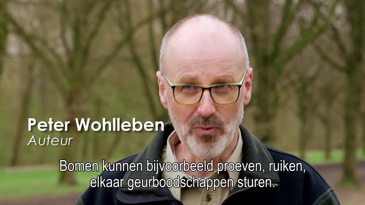 Download Vaderdagcadeautip! Het verborgen leven van bomen van Peter Wohlleben