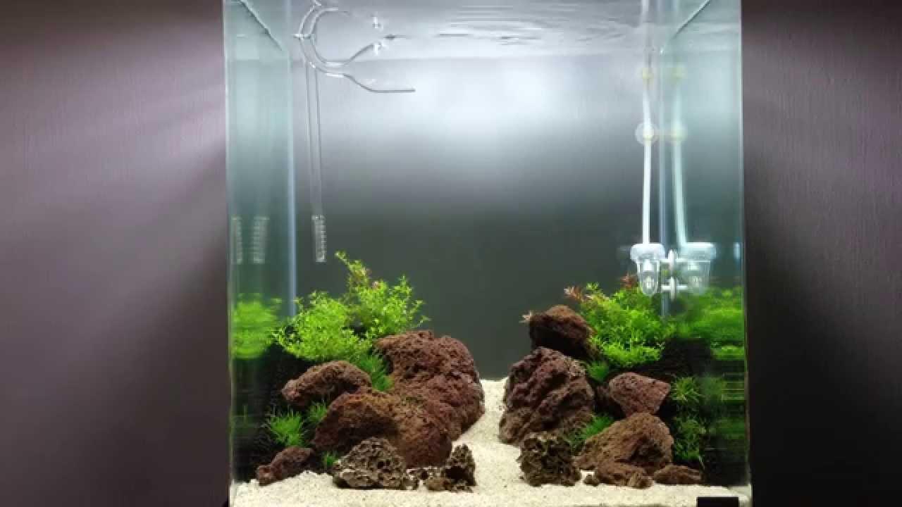 Nano Dennerle 60l aquascaping iwagumi - YouTube