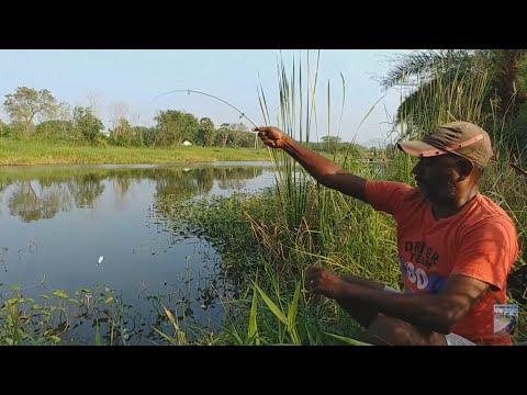 Fish Hunting || Amazing Rohu Fishing