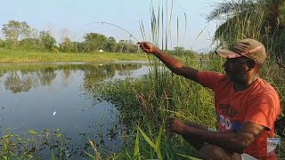 Fish hunting || Amazing Rohu fishing
