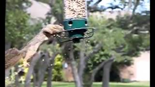 Squirrel Spinning