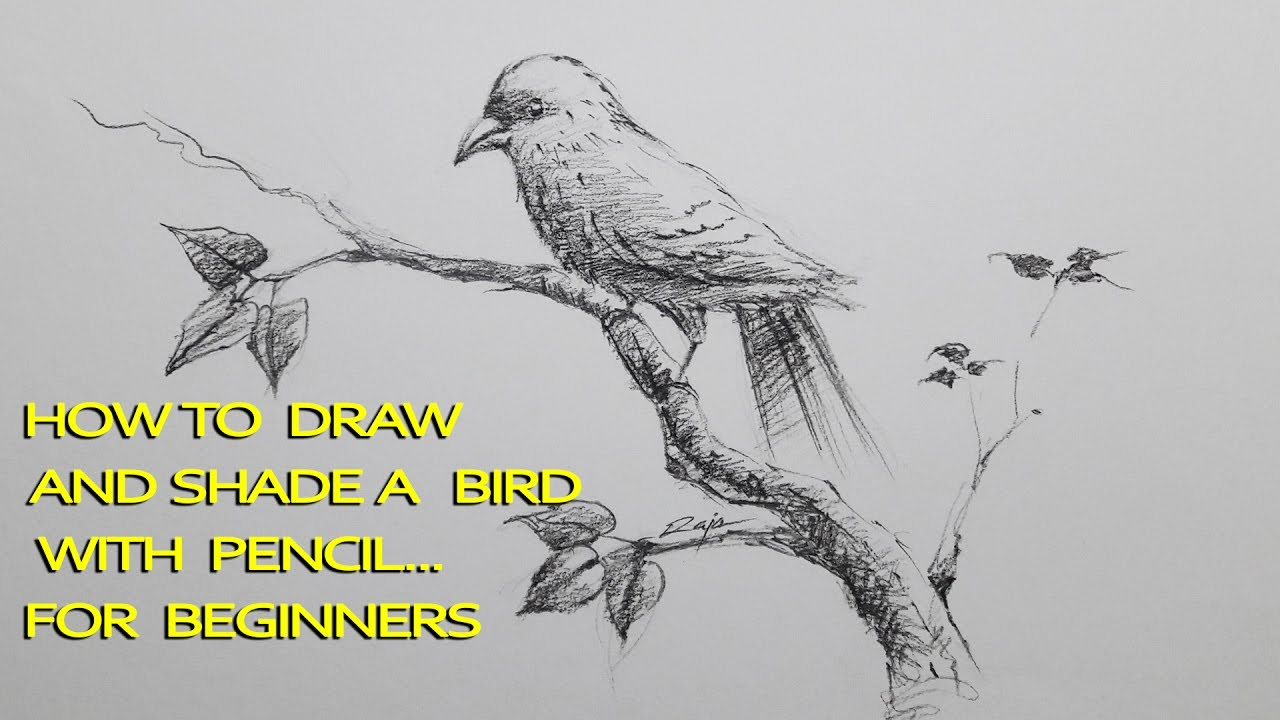 How to draw and shade a bird with pencil drawing shading