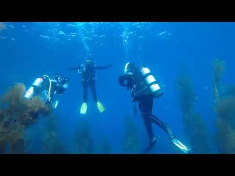 Scuba Classes | OW Students Practicing Buoyancy