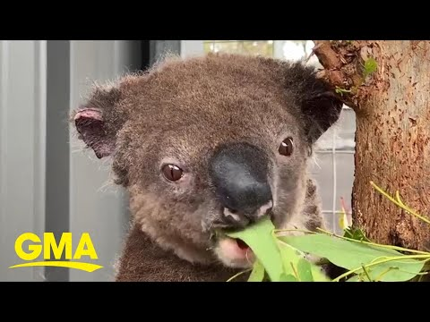 Mikey V - Meet Paul the Koala!