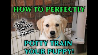 A Complete Guide To House Training Any Puppy!