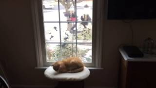Cat Doesn't Pay Attention Until It's Too Late