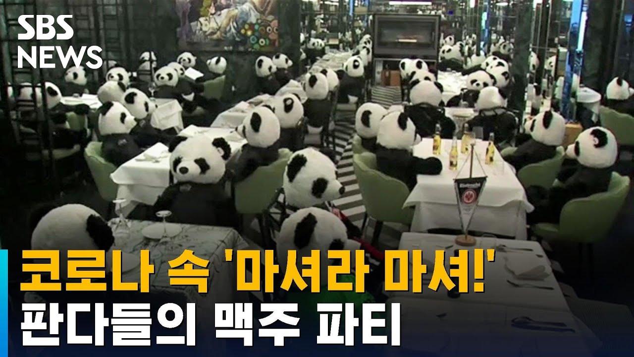 코로나 속 만석인 가게?…판다들의 맥주 파티 / SBS