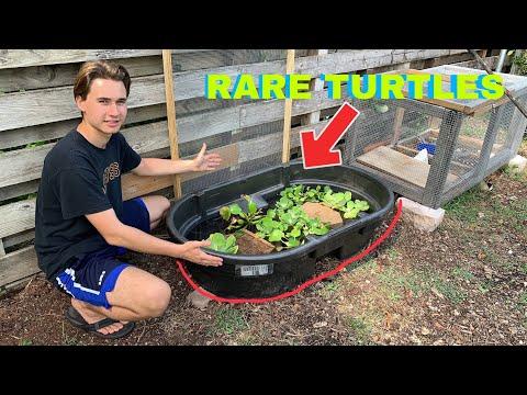 MINI POND FOR ENDANGERED TURTLES !! DIY