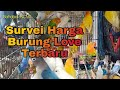 Review Harga Terbaru Love Bird Di Pasar Burung Curug  Mp3 - Mp4 Download