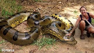 Największe węże na świecie