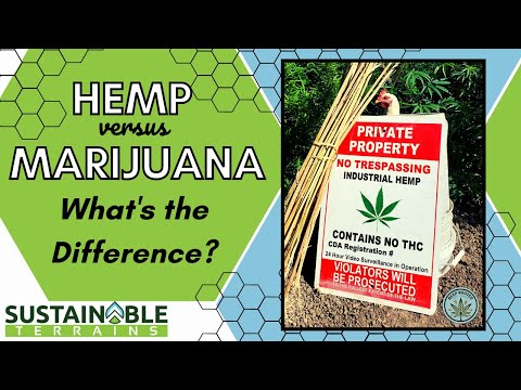 Hemp and Marijuana: What is the Difference?